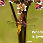 Where there is love there is life quote image